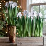 Metallic Paper Potted Paper Whites