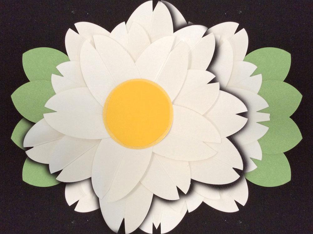 Daisy-Combo