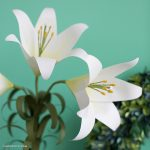paper camellia - PP Paper Easter Lily 1 150x150 - Paper Camellia paper camellia - PP Paper Easter Lily 1 150x150 - Paper Camellia